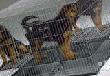 Клетка для щенков Midwest Puppy Playpen 122х122х76